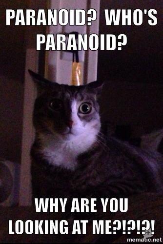Paranoid cat meme