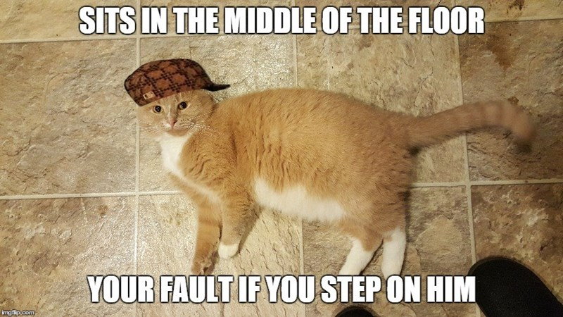 Not Funny Cat Meme : Funny cat memes that never fail to make us lol i can has