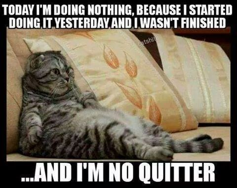 hard working cat meme