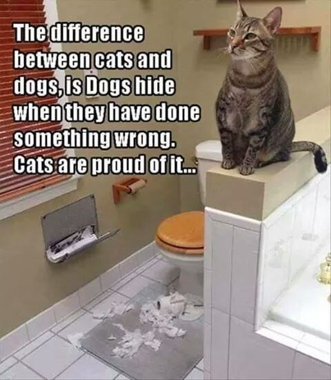 funny Dog VS Cat Meme about how cats don't hide their wrong.