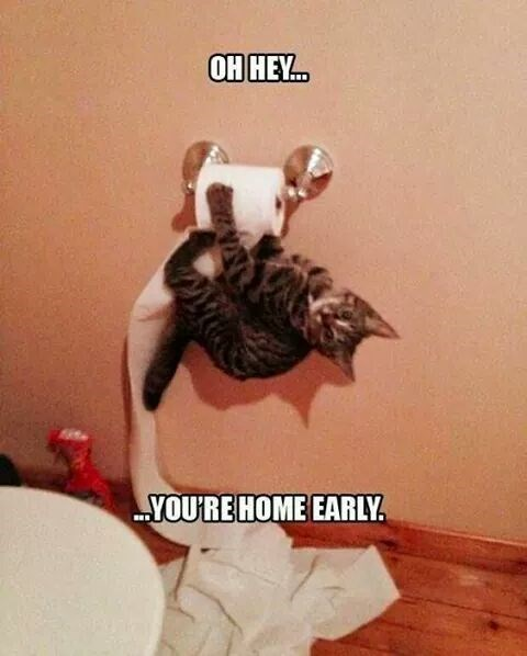 Cat attacking the toilet paper and remarking that you sure are home early.
