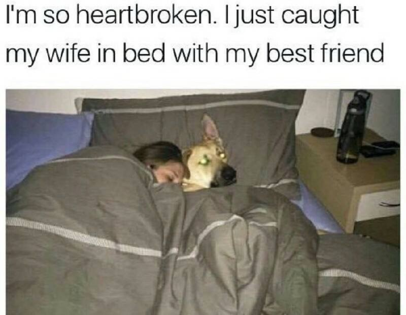 Meme about catching your wife cheating with pic of woman sleeping in bed with a dog