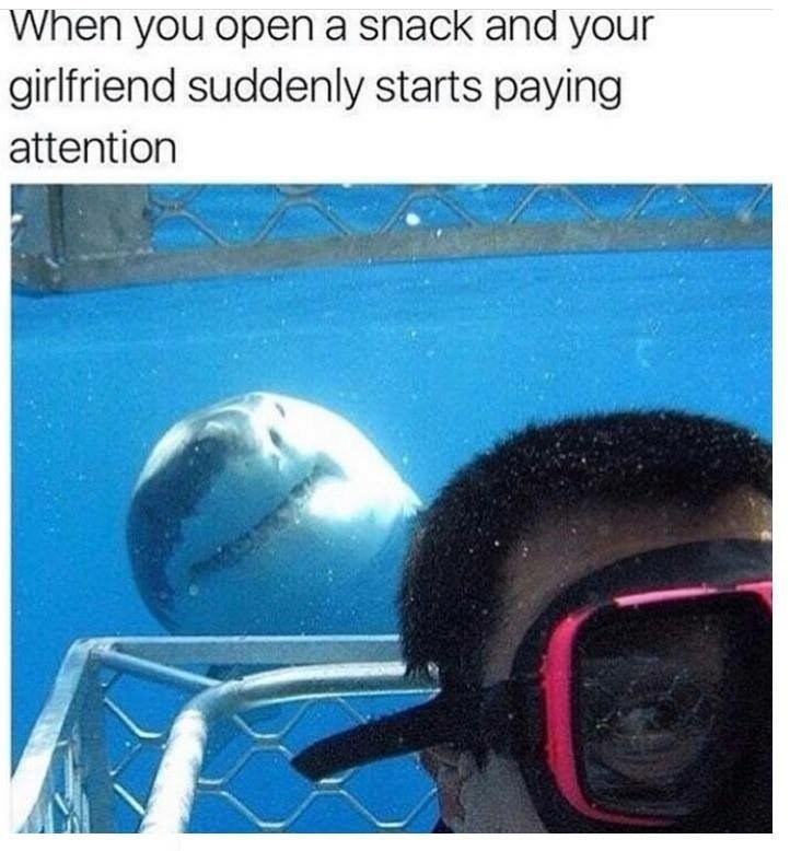 Meme about your girlfriend ignoring you until you bring a snack with pic of Shark peeking behind diver