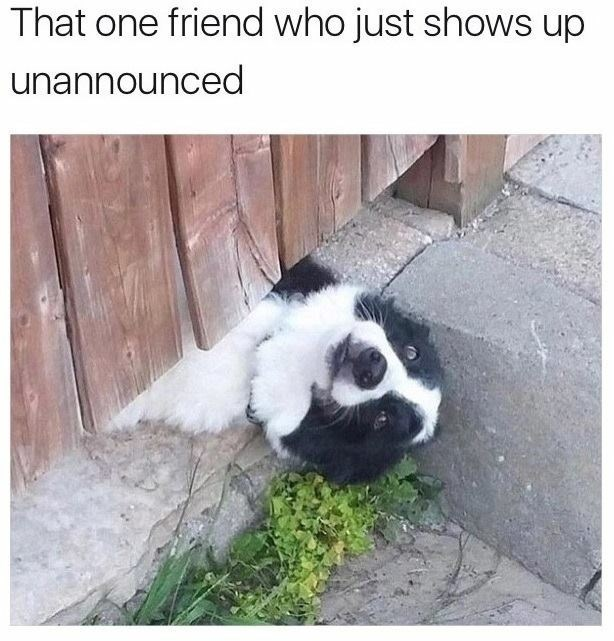 Meme about people who invite themselves over with pic of dog peeking under fence