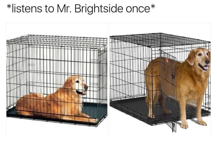 "Meme about listening to The Killer's ""Mr Brightside"" with pic of dog coming out of its cage"