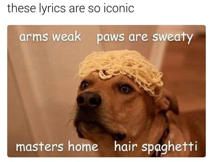 "Eminem's ""Lose Yourself"" lyrics sung by dog with spaghetti on its head"