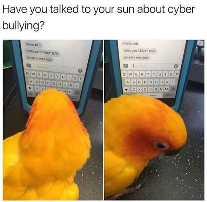 Meme about cyber bullying with pic of bird reading mean texts and looking sad