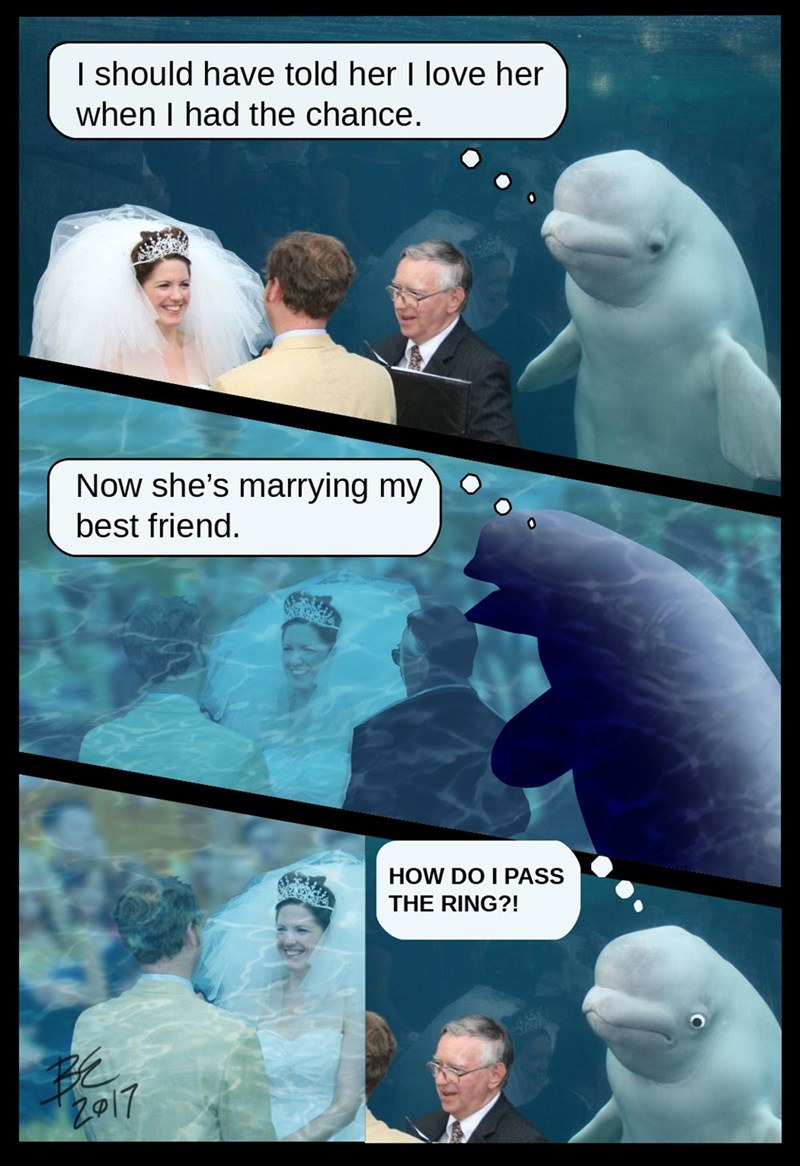 Beluga whale - I should have told her I love her when I had the chance. Now she's marrying my best friend. HOW DO I PASS THE RING?! Z917