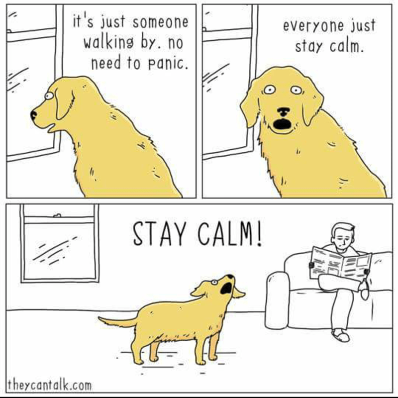 wholesome meme of a dog trying to stay calm when seeing a person walk by from the window