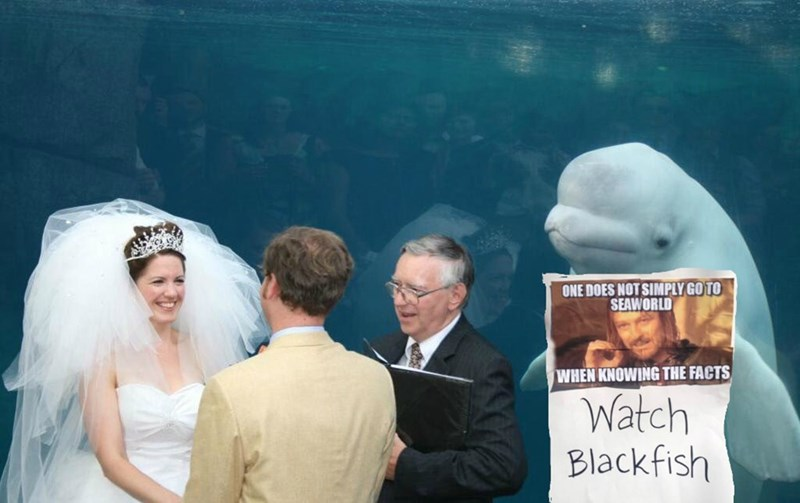 Wedding - ONE DOES NOT SIMPLY GO TO SEAWORLD WHEN KNOWING THE FACTS Watch Blackfish