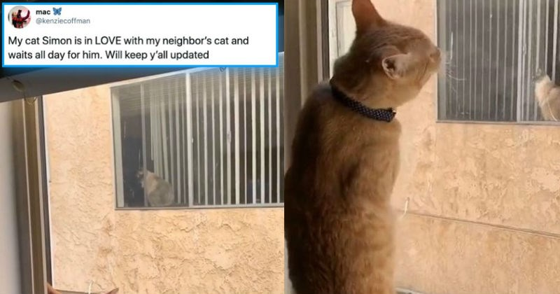 A Twitter thread about two neighbor cats falling in love through the window.