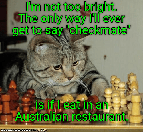 cat australian caption checkmate restaurant - 9014179328