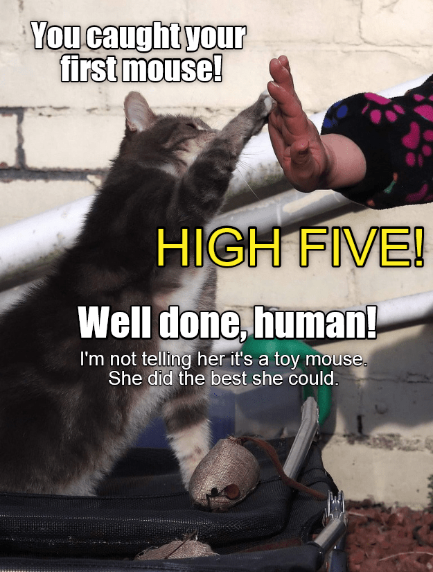 cat caption caught first human mouse - 9014248192
