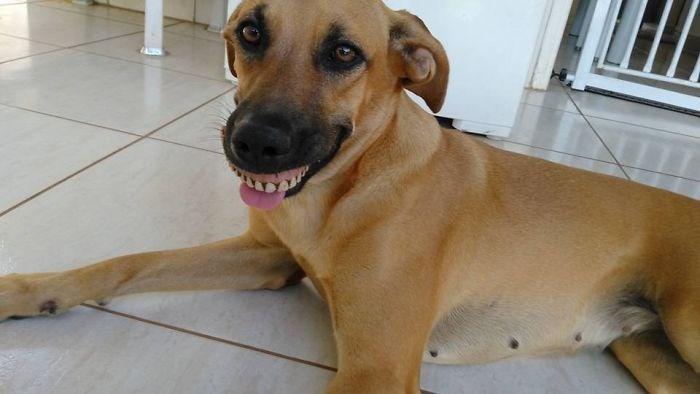 dentures - Dog