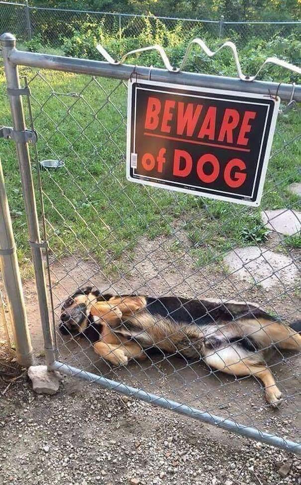 Dog - BEWARE of DOG