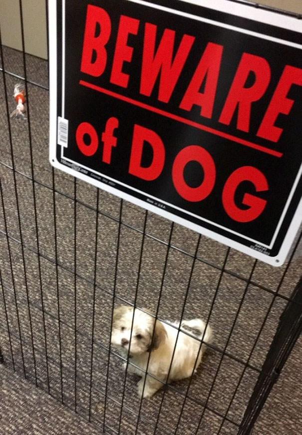 Font - BEWARE of DOG
