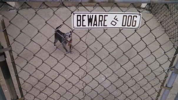 Wire fencing - BEWARE& DOG