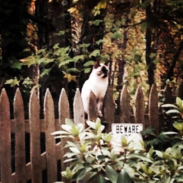 Cat - BEWARE