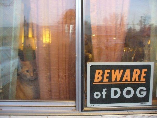 Window - BEWARE of DOG PT