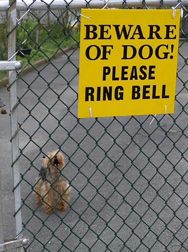 Dog - BEWARE OF DOG! PLEASE RING BELL