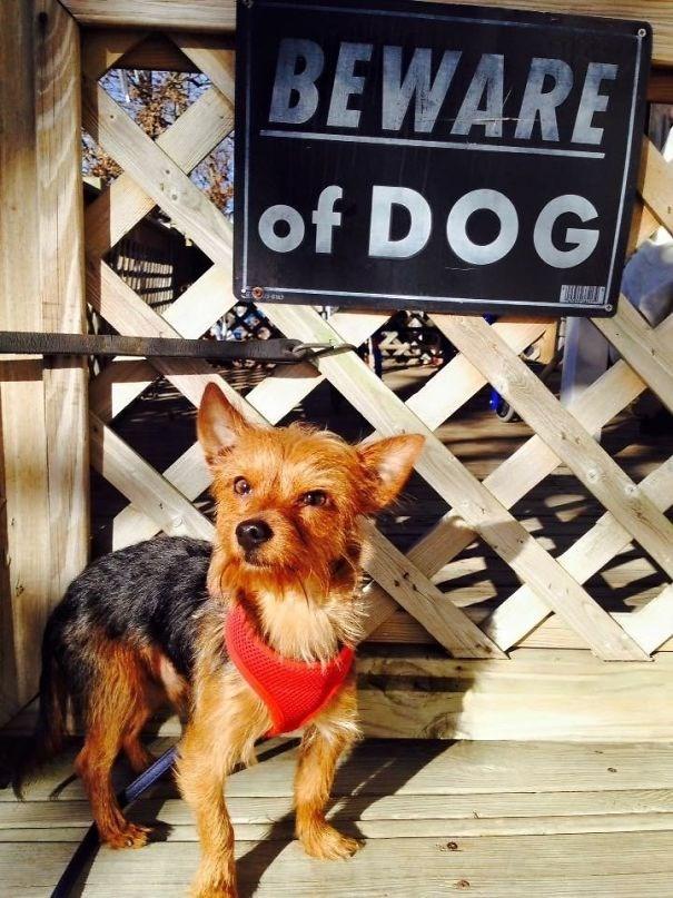Dog - BEWARE of DOG AT