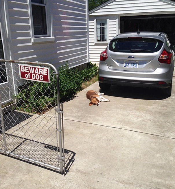 Motor vehicle - UCR 0497 BEWARE of DOG