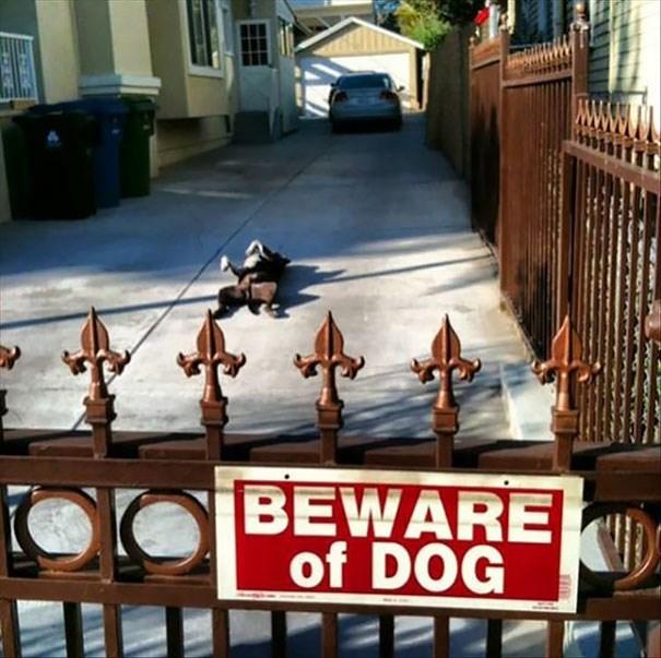 Iron - BEWARE of DOG