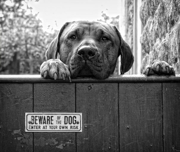 Dog - [BEWARE DOG THE ENTER AT YOUR OWN RISK