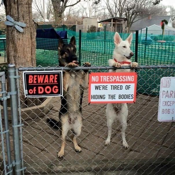 Mammal - BEWARE of DOG NO TRESPASSING WE'RE TIRED OF PAR HIDING THE BODIES EXCEP BOB'S
