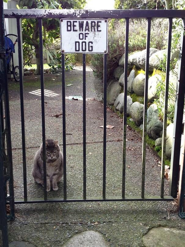 Iron - BEWARE OF DOG eans . TA