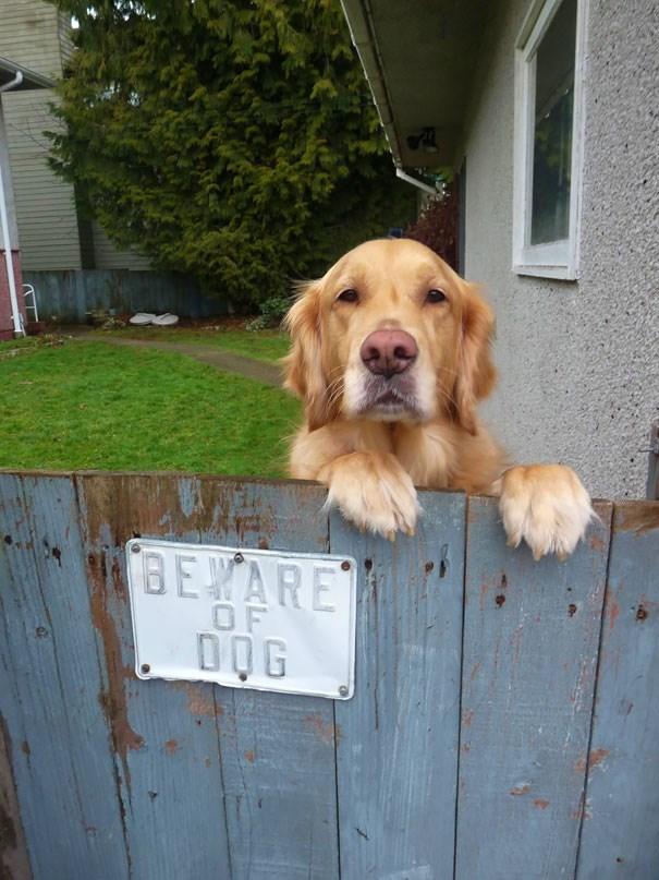 Dog - BEYARE OF DQG