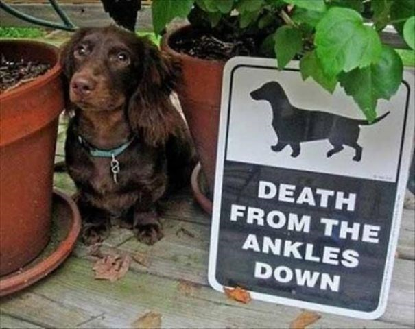 Dog - DEATH FROM THE ANKLES DOWN