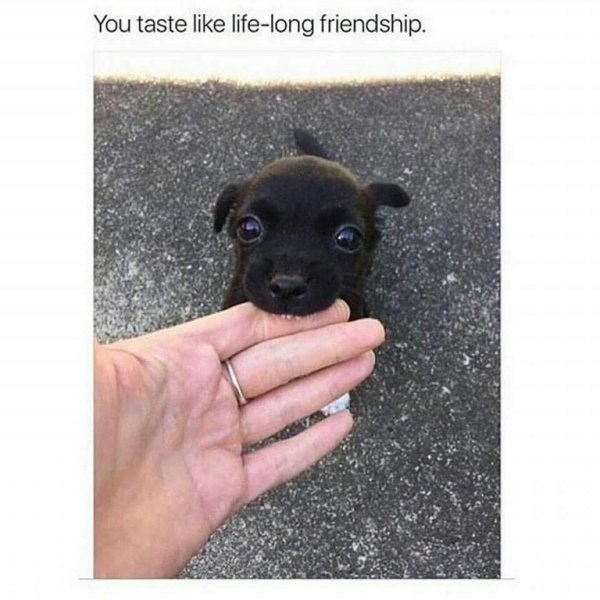 wholesome meme - Dog - You taste like life-long friendship.