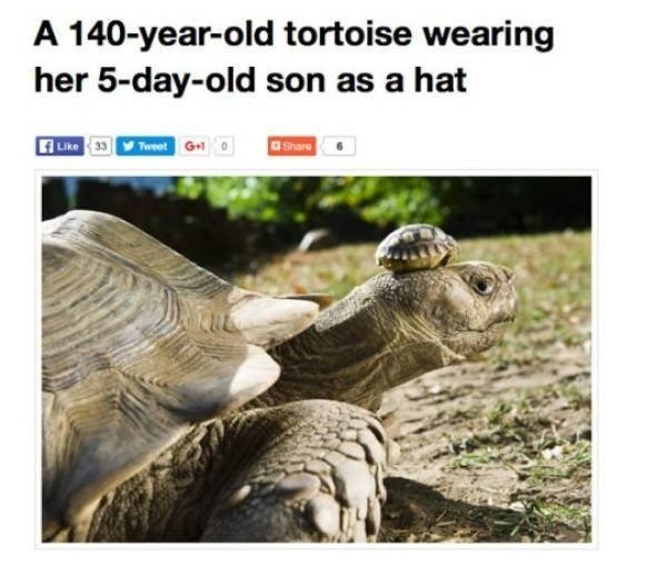 wholesome meme - Tortoise - A 140-year-old tortoise wearing her 5-day-old son as a hat Like 3Tweet G+ Spare