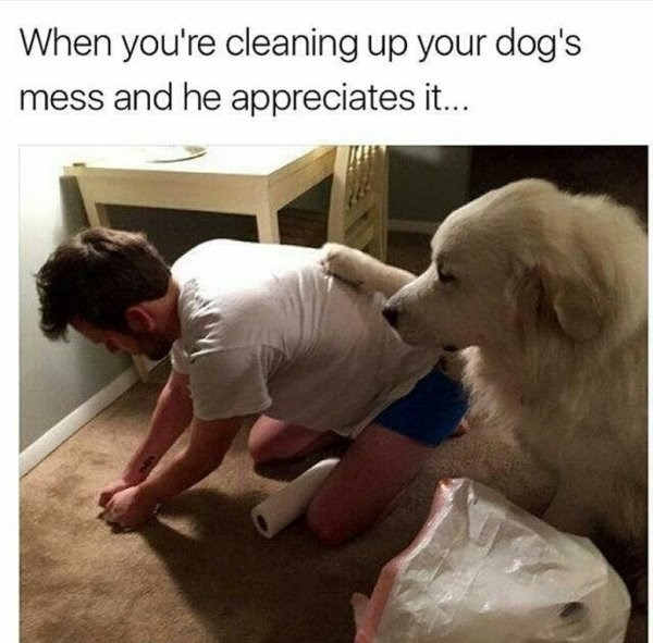 wholesome meme - Dog - When you're cleaning up your dog's mess and he appreciates it...