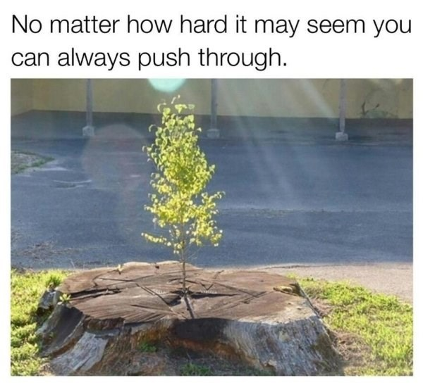 wholesome meme - Nature - No matter how hard it may seem you can always push through