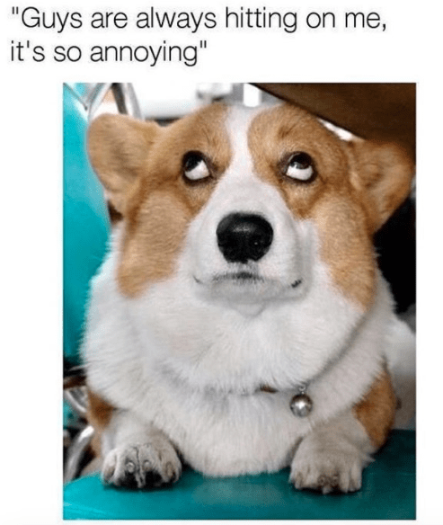 "meme - Dog - ""Guys are always hitting on me, it's so annoying"""