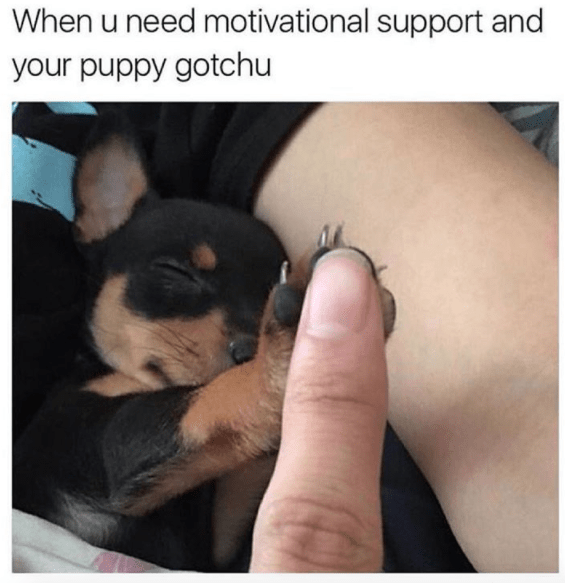 meme - Canidae - When u need motivational support and your puppy gotchu