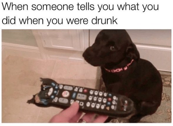 meme - Dog breed - When someone tells you what you did when you were drunk 40
