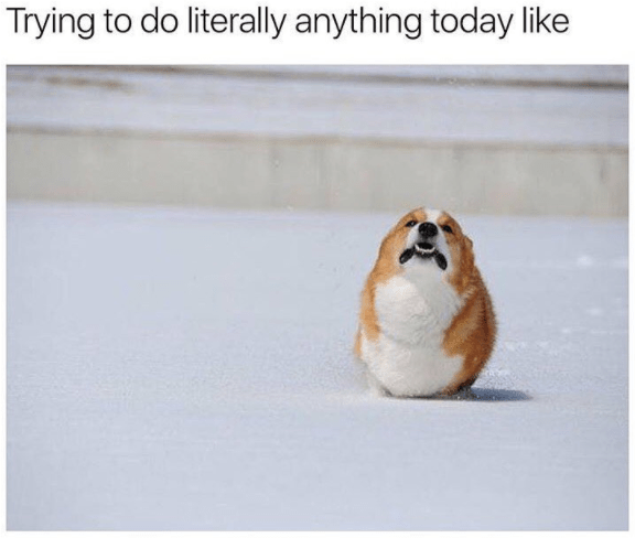 meme - Guinea pig - Trying to do literally anything today like
