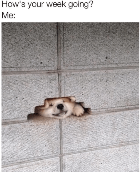 meme - Dog - How's your week going? Me: