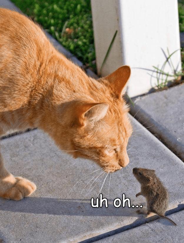 cat caption uh oh - 9014807296