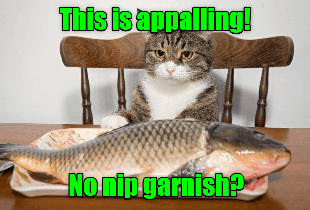 appalling cat caption garnish no nip - 9015006208