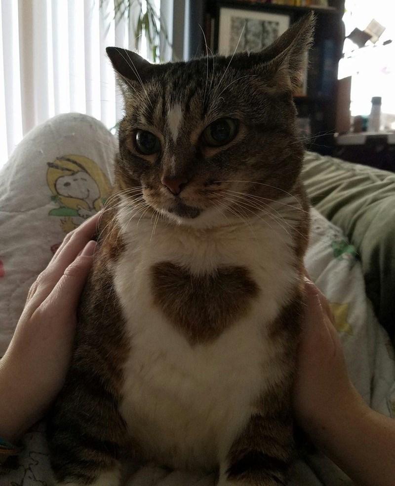 fur heart Cats - 9015025664