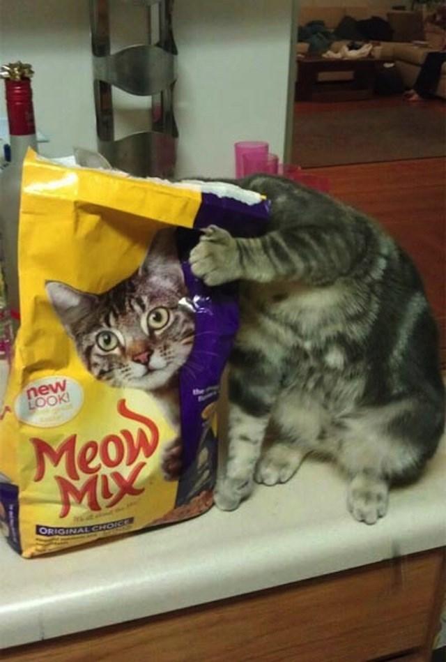 Cat - new LOOK Meow ORIGINAL GHOIC