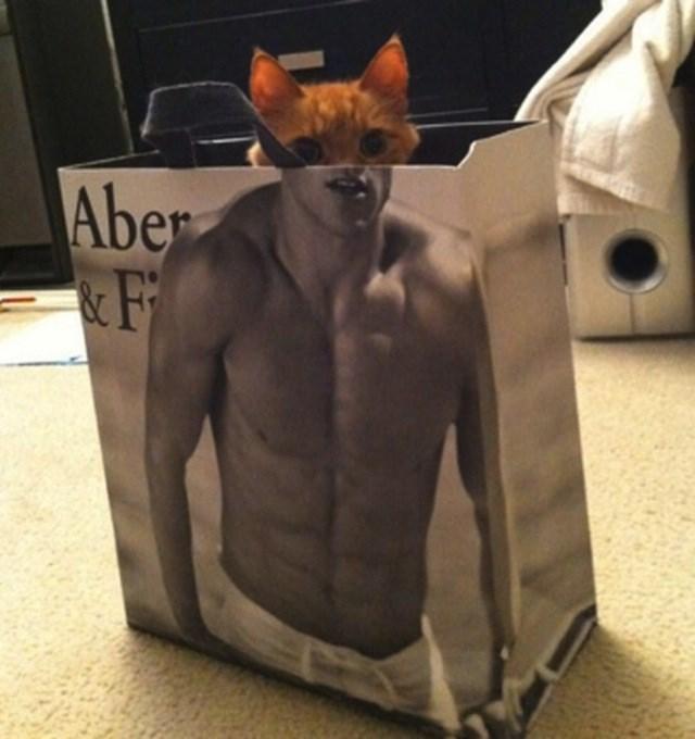 Cat - Aber &F
