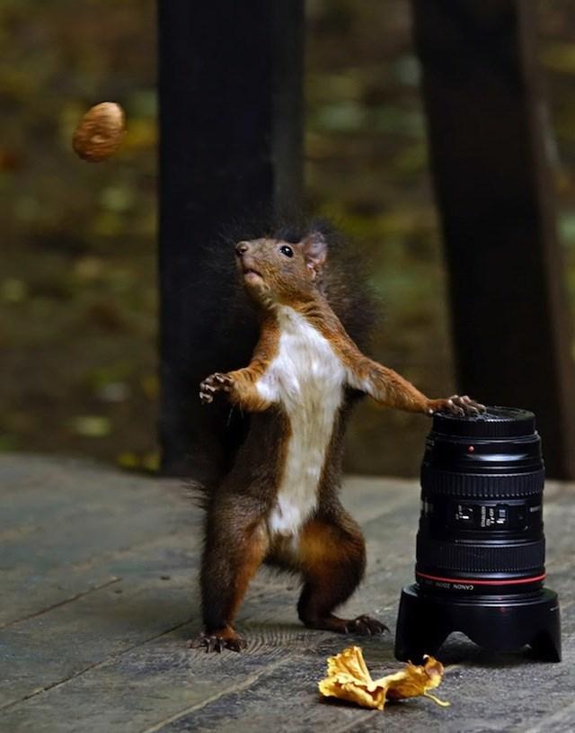 Squirrel - oe NON