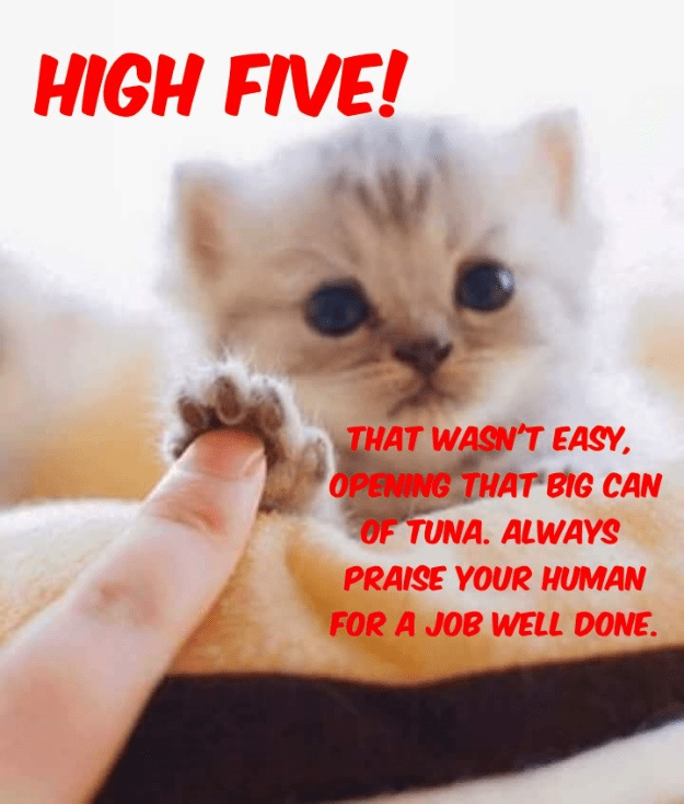 cat,caption,high five,human,praise,tuna,opening