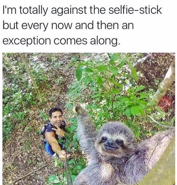 awesome selfie of a sloth and a man taken with a selfie stick