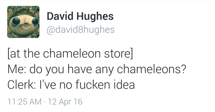 awesome tweet about not being able to find chameleons in a chameleon store